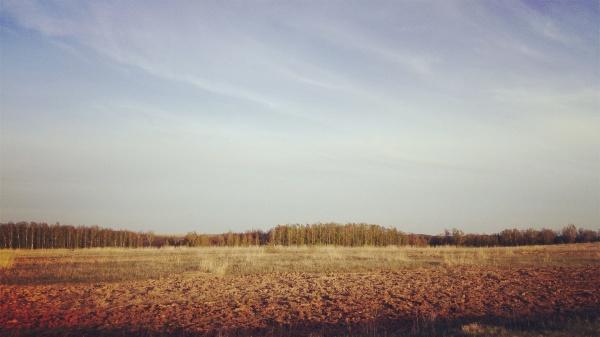 Старейшина чувашских дубов